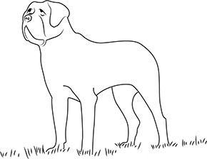 Ausmalbild für Bernhadiner Hund