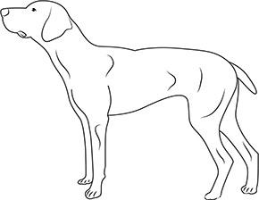 Ausmalbild für Dobermann Hund