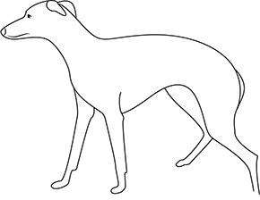 Ausmalbild für Greyhound Hund