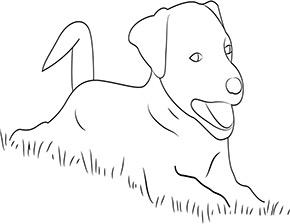 Ausmalbild für Hund im Gras