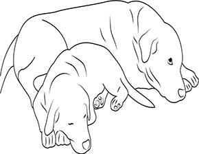Ausmalbild für Hund mit Welpe