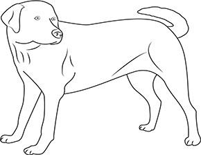 Ausmalbild für Labrador Hund