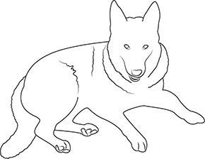 Ausmalbild für Schäferhund