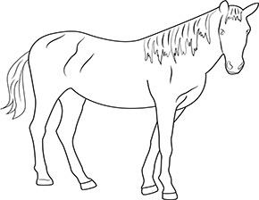 Ausmalbild für braunes Pferd