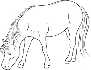 Ausmalbild für grasendes Pferd
