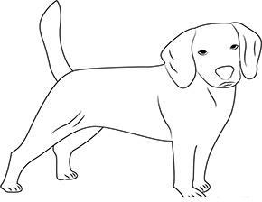 Ausmalbild für junger Hund